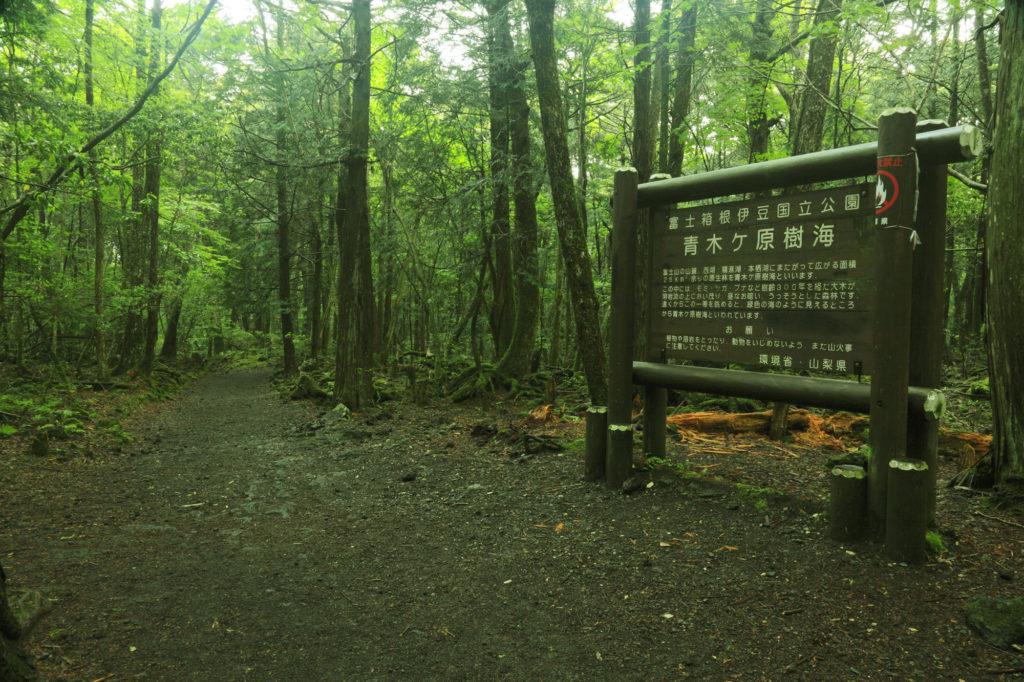 """Aokigahara """"El bosque de los suicidios en Japón"""" 1"""