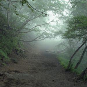 """Aokigahara """"El bosque de los suicidios en Japón"""" 6"""