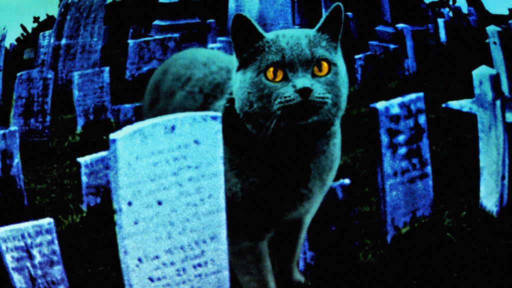 """La verdadera historia de """"cementerio de mascotas"""" 1"""