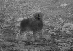 """La verdadera historia de """"cementerio de mascotas"""" 3"""