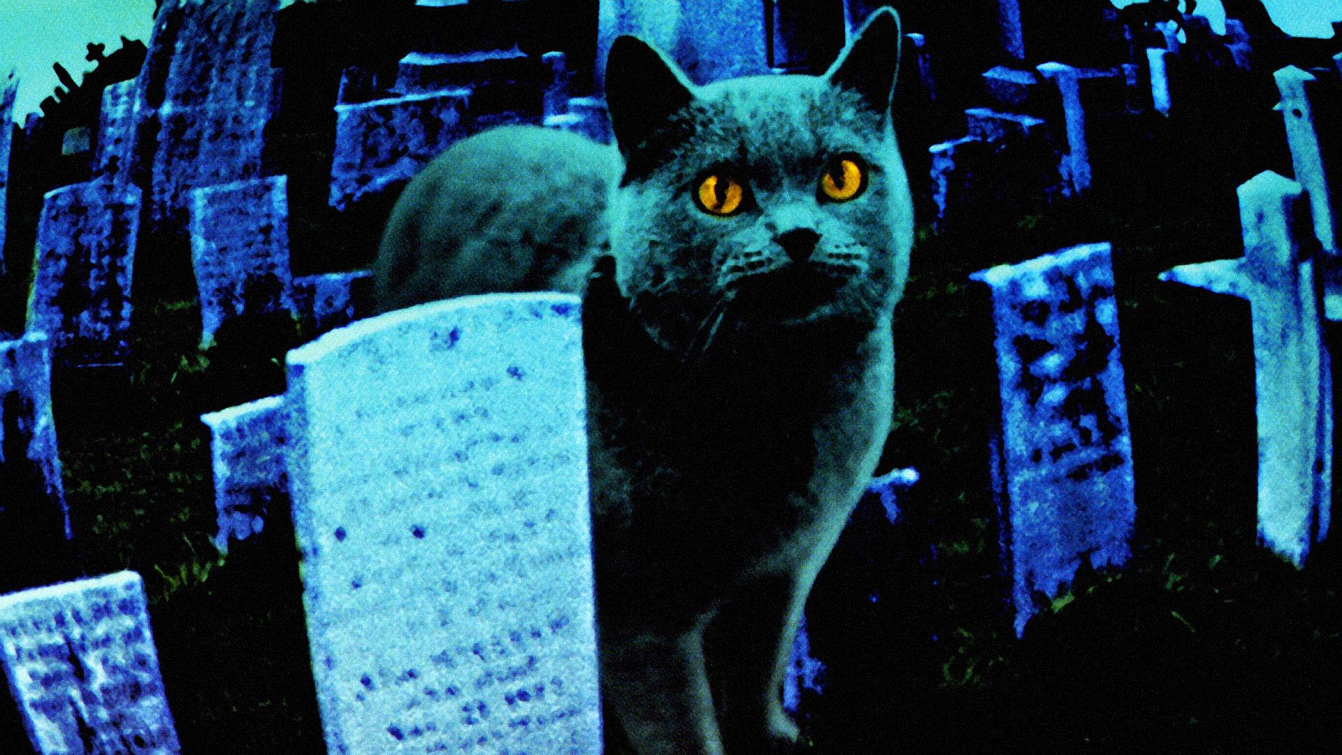 """La verdadera historia de """"cementerio de mascotas"""" 6"""