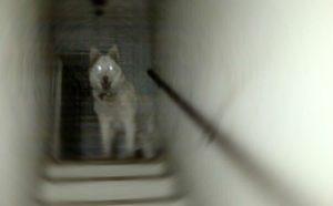7 historias de mascotas fantasmas que volvieron para ver a sus dueños 4