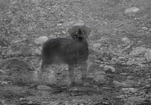 7 historias de mascotas fantasmas que volvieron para ver a sus dueños 9