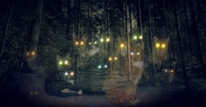 7 historias de mascotas fantasmas que volvieron para ver a sus dueños 2