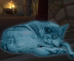 7 historias de mascotas fantasmas que volvieron para ver a sus dueños 8