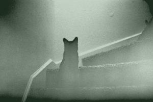 7 historias de mascotas fantasmas que volvieron para ver a sus dueños 7