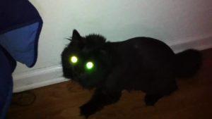 7 historias de mascotas fantasmas que volvieron para ver a sus dueños 3