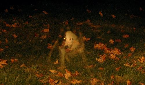 7 historias de mascotas fantasmas que volvieron para ver a sus dueños 1