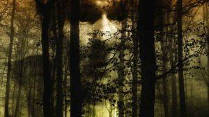 Los 5 bosques con más actividad paranormal en el mundo 2