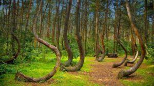 Los 5 bosques con más actividad paranormal en el mundo 9