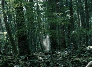 Los 5 bosques con más actividad paranormal en el mundo 5