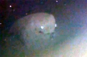 Misteriosas criaturas captadas en fotografías 6