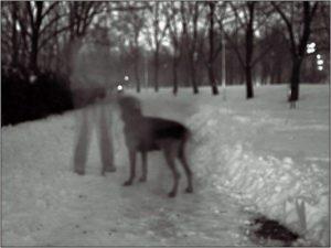 ¿Porque los perros pueden ver fantasmas? 5