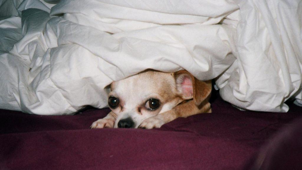 ¿Porque los perros pueden ver fantasmas? 1