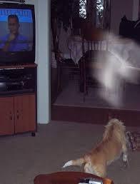¿Porque los perros pueden ver fantasmas? 2
