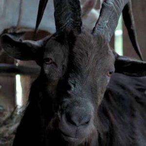 "La verdadera historia de la película ""The Witch"" 3"