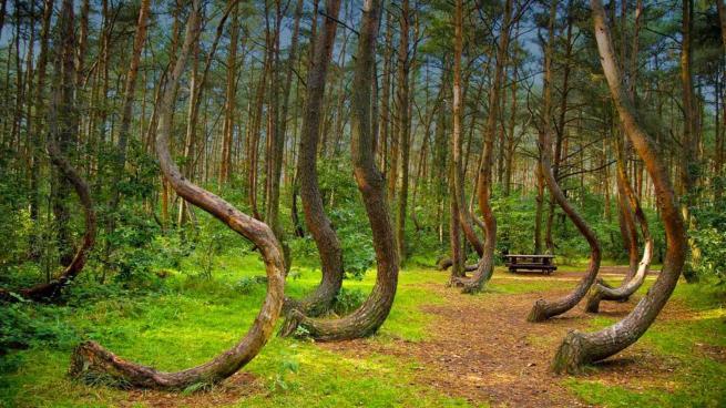 El aterrador bosque embrujado de Hoia Baciu 27