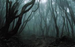 El aterrador bosque embrujado de Hoia Baciu 4