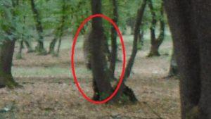 El aterrador bosque embrujado de Hoia Baciu 2