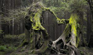El aterrador bosque embrujado de Hoia Baciu 3