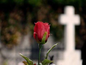 La tumba de las rosas 3