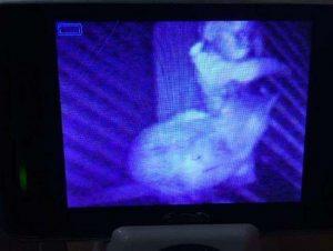 15 espeluznantes fotografías capturadas desde monitores de bebés 11