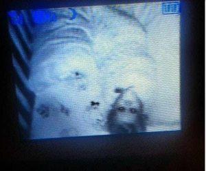 15 espeluznantes fotografías capturadas desde monitores de bebés 3