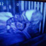 15 espeluznantes fotografías capturadas desde monitores de bebés 9