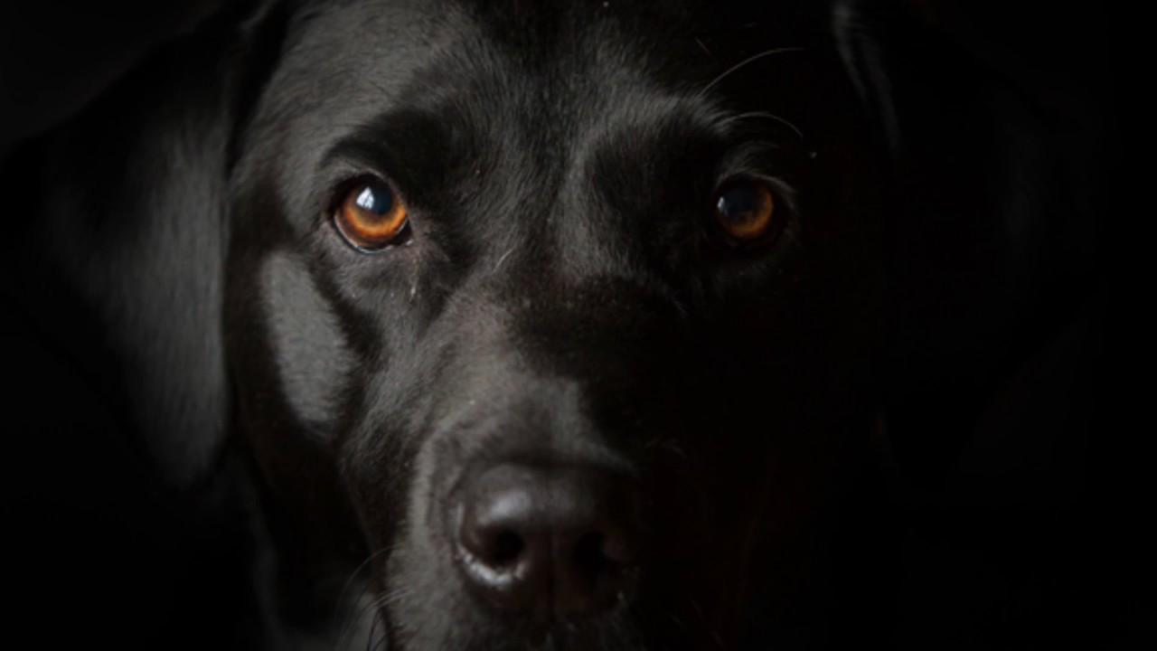 ¿Porque aullan los perros? ¿Estan viendo a la muerte? 5